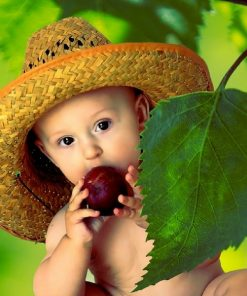 Baby Food Meals